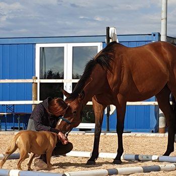 Situation Pferdeunterstütztes Coaching mit Pferd und Hund