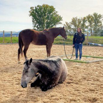Frau mit einem stehenden und einem liegenden Pferd im Coaching