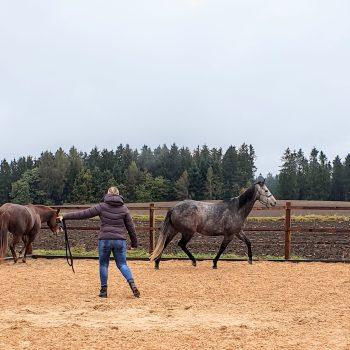 Pferdegestütztes Coaching mit 2 Pferden