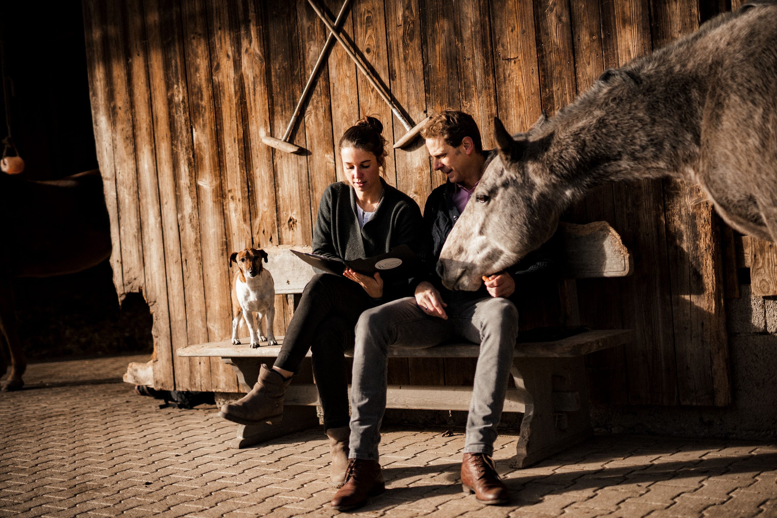 Lesen mit Pferd und Hund