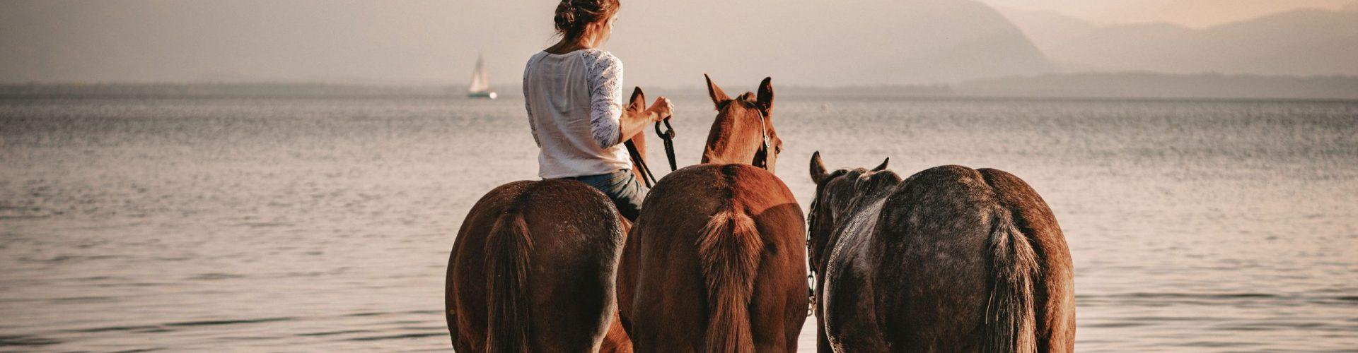 3 Pferde mit Reiterin im Chiemsee