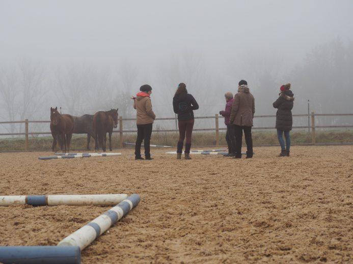 Pferegestützter Workshop mit 3 Pferden und 5 Menschen