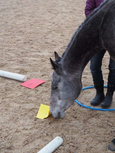 Pferd schnuppert an Zettel im Sand