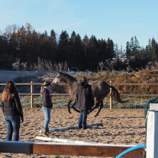 Menschen auf Reitplatz mit galoppierendem Pferd im Coaching
