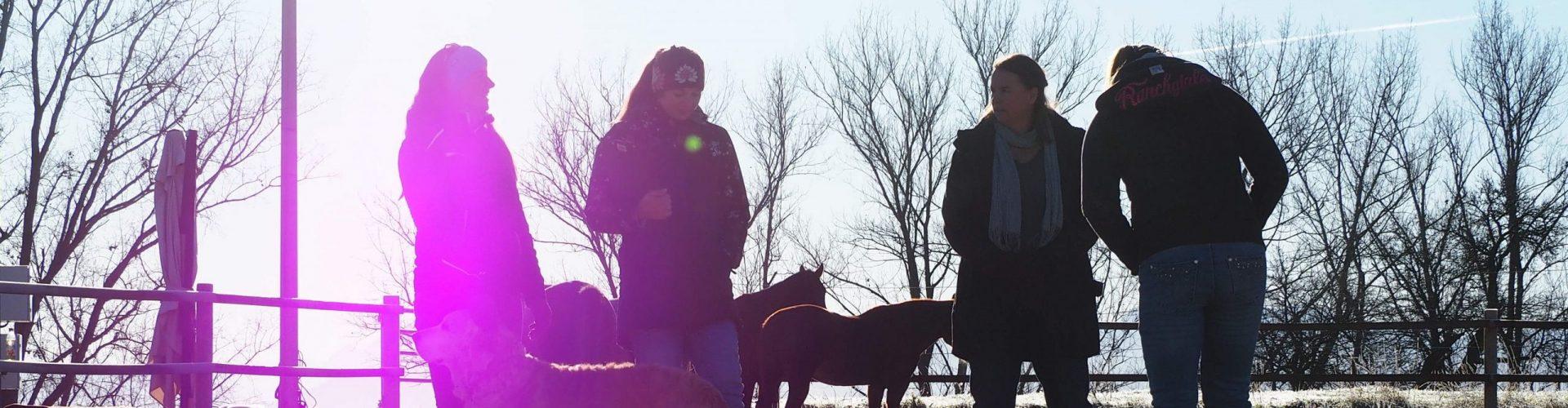 Coachingsituation mit 4 Menschen und Pferden im Hintergund