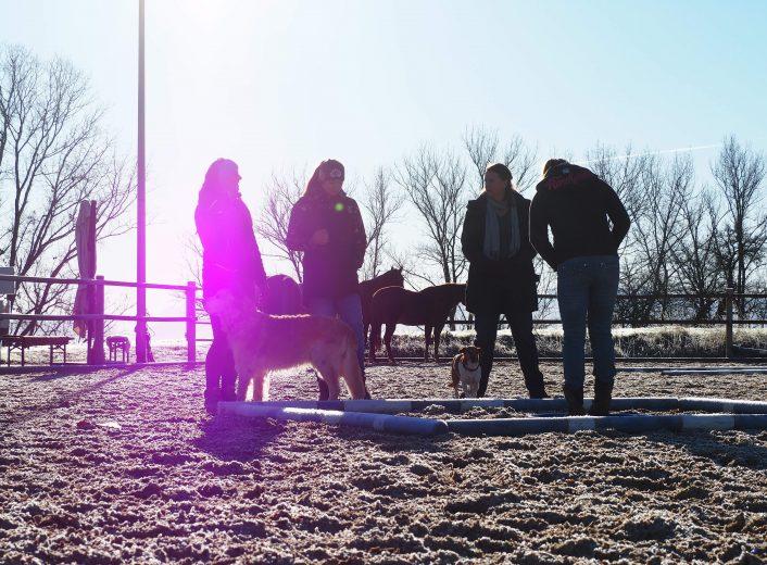 Workshop Situation mit Pferden