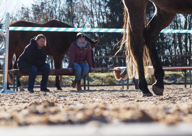 Workshop - Teilnehmer beobachten Pferd