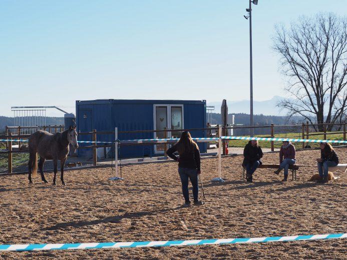 Pferdegestützter Workshop mit 4 Personen und 1 Pferd