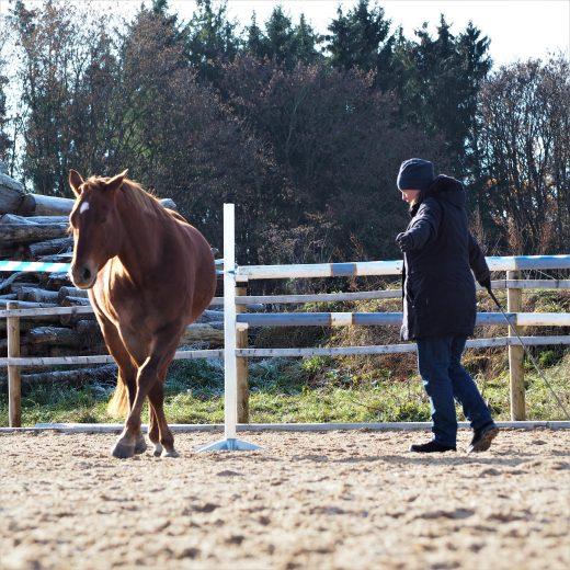 Frau mit Pferd bei der Bodenarbeit