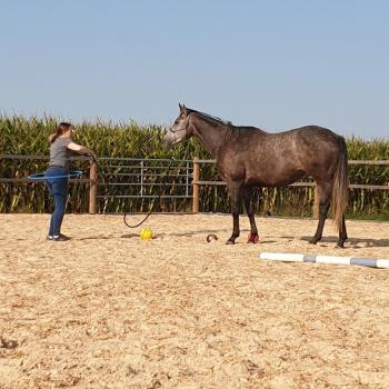 Coachee im pferdegestützen Coaching mit Pferd